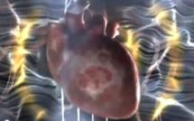 Le cerveau du cœur