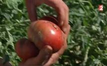Faire pousser du maïs et des légumes sans eau, c'est possible
