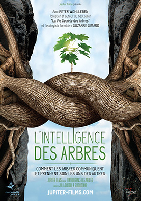 """L'intelligence des arbres"", documentaire de Julia Dordel, Guido Tölke"